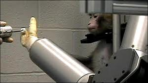 monkey robotic arm