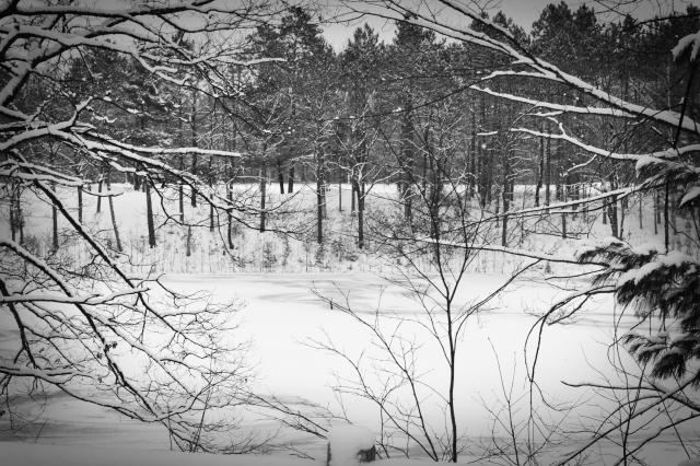 snowy Gaylord header (5)